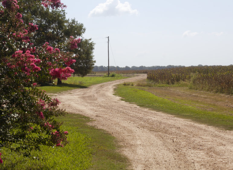 A dirt road on the property that inspired Richard Grant's novel.