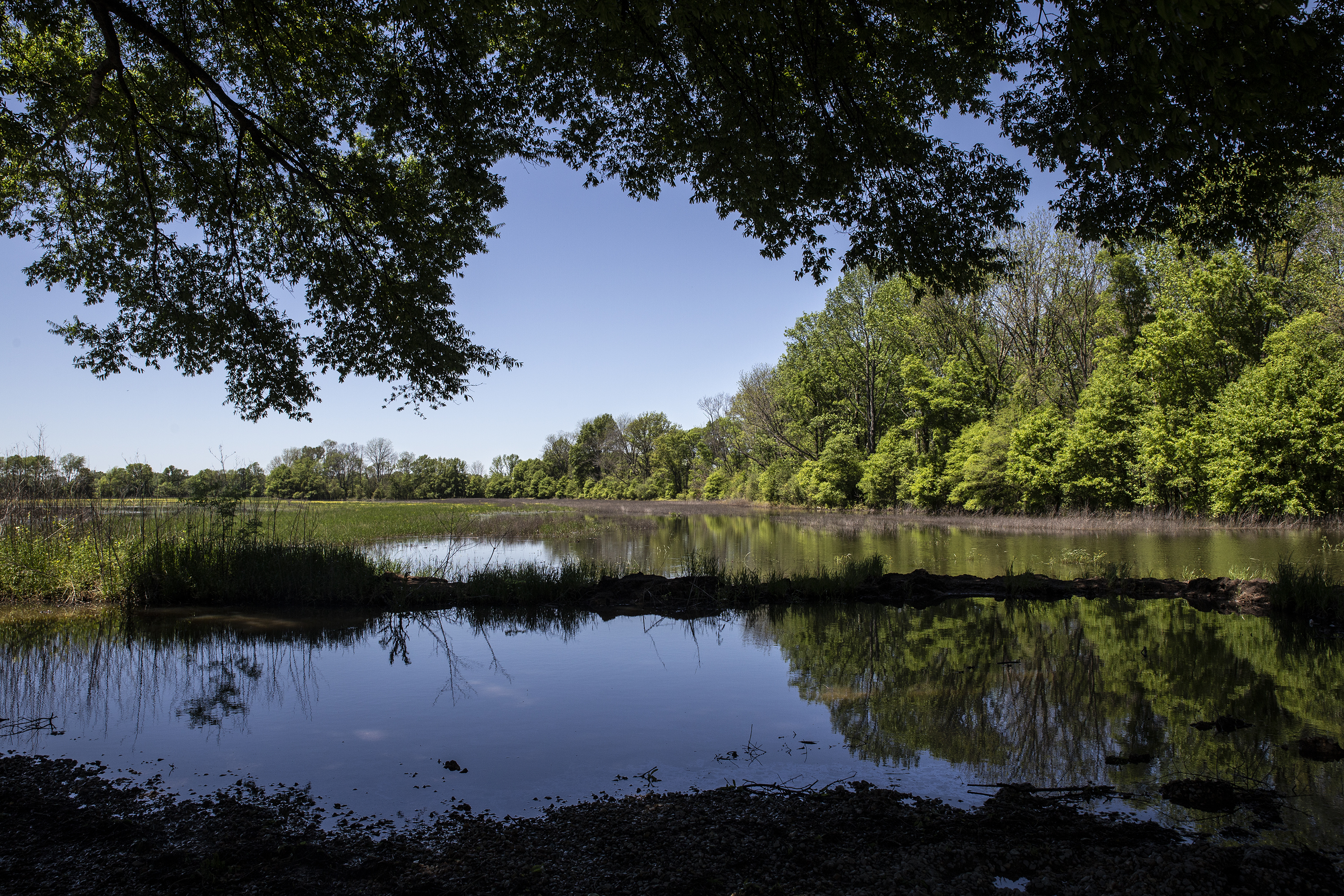 The Homeland and the Wetlands: The Yazoo backwater fight